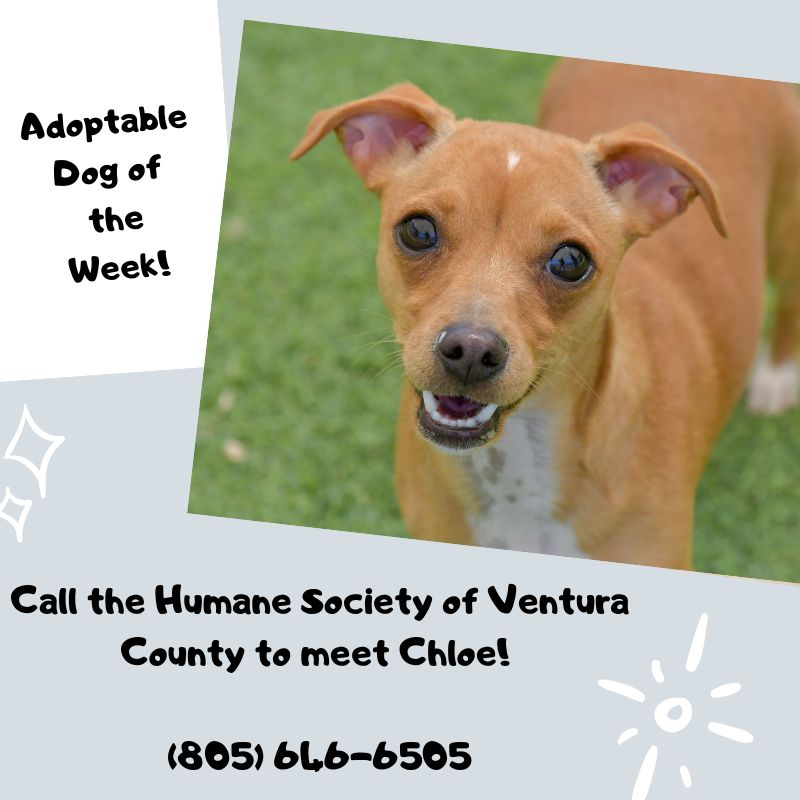 Human Society of Ventura County Adopt Dog